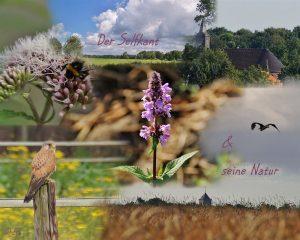 Foto-Natur (Bild 2)